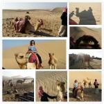 Abu Dhabi Camel Trekking