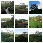 Hobbiton Pics 1