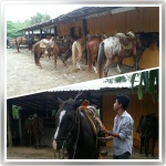 Ixtapa - Horse Back Riding 1